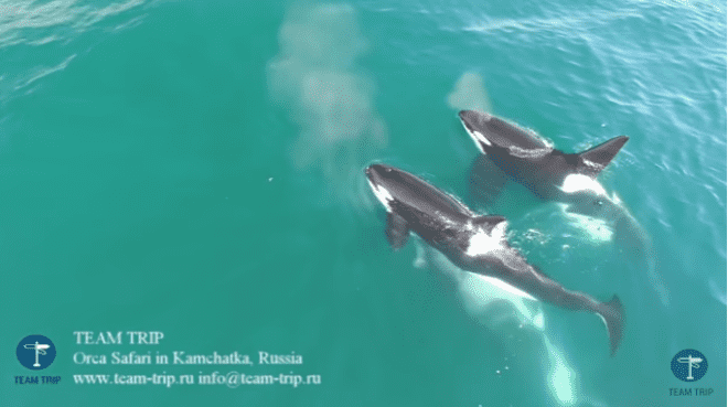 http://debate.com.mx/export/sites/debate/img/2017/07/05/orcas.png_164254941.png
